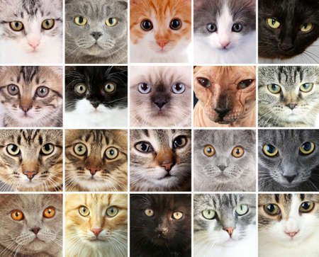 Cute cat faces collage Stock Photo