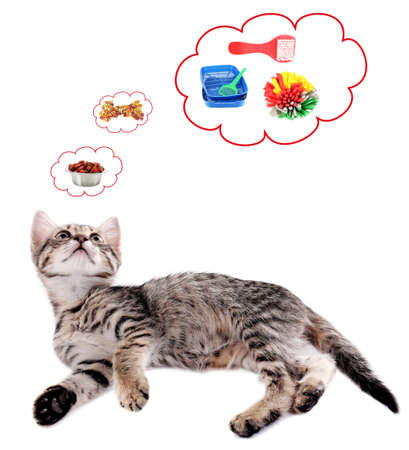 furry stuff: Cute cat and it thought bubbles isolated on white