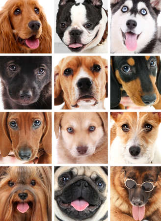 Dog portraits collage photo