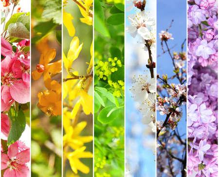 spring leaf: Spring collage Stock Photo