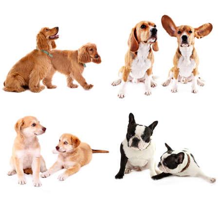 labrador retriever: Dog collage Stock Photo