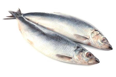 escamas de peces: Pescado fresco aislado en blanco Foto de archivo