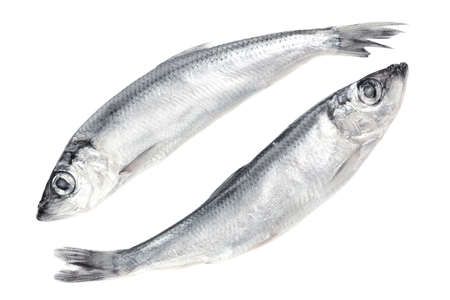 sprat: Fresh fish isolated on white