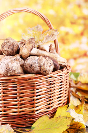 Wild mushrooms and autumn leaves in basket on bright background photo