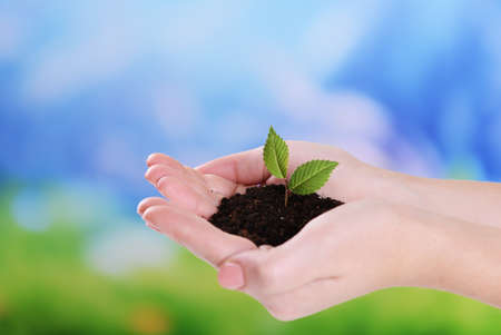 Plant in hands on light blue background photo