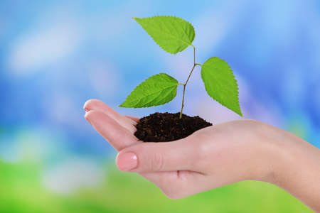 Plant in hand on light blue background photo