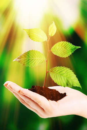 Plant in hand on bright background photo