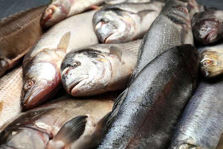 atrapar: Pescado fresco de los peces de cerca Foto de archivo