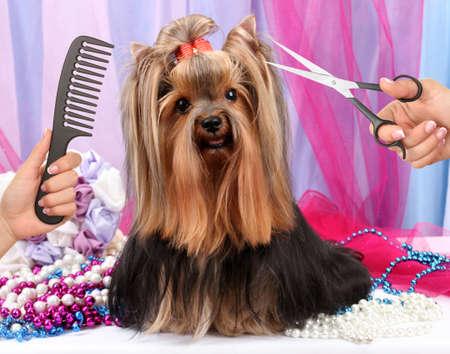 ヨークシャー テリアは犬のためのサロンでグルーミング