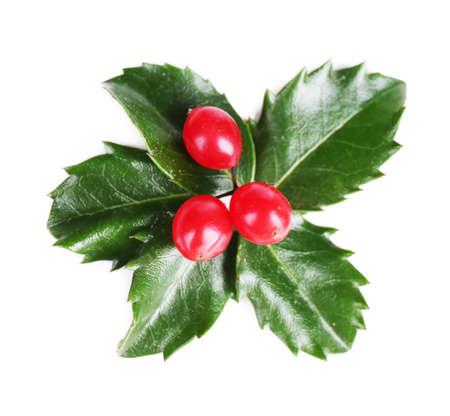 ilex aquifolium holly: European Holly (Ilex aquifolium) with berries, isolated on white Stock Photo