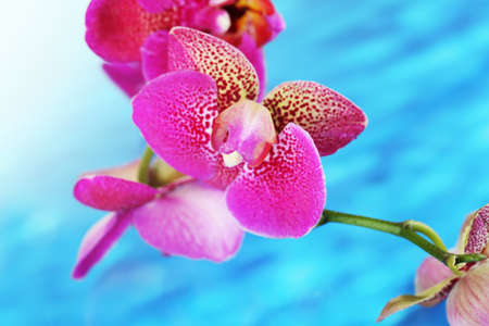 fleck: Beautiful orchid on blue background