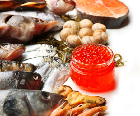 Fresh catch of fish and other seafood close-up photo