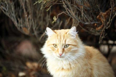 Beautiful big cat, outdoors Stock Photo