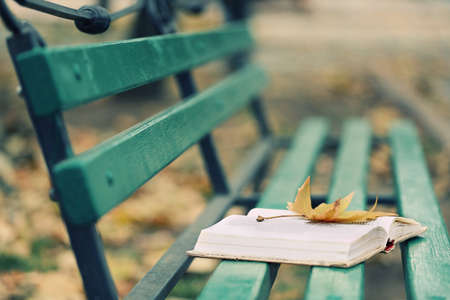 timber bench seat: Open book with leaf lying on the bench in autumn park