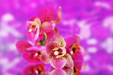fleck: Beautiful orchid on purple background