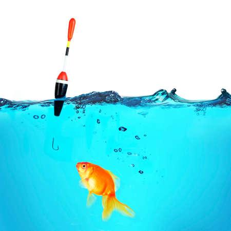 Fishing a goldfish, isolated on white photo