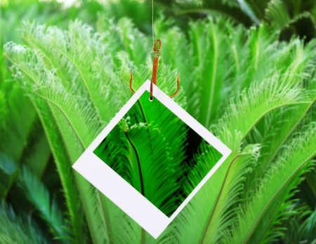 hamedoreya: Photo on fish hook on green bush background Stock Photo