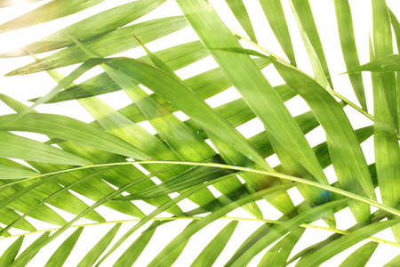 rabbet: Beautiful palm leaves as background