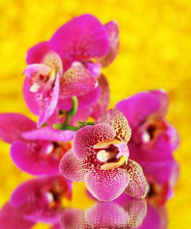fleck: Beautiful orchid on yellow background