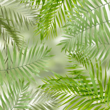 rabbet: Green palm leaves as background