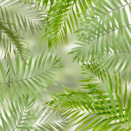 hamedoreya: Green palm leaves as background