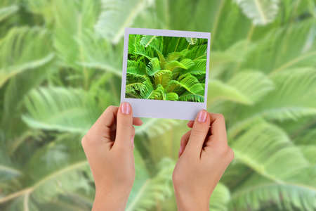 hamedoreya: Photo card in hands on palm leaves background