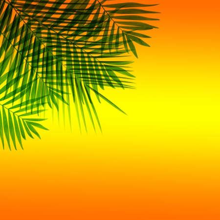 hamedoreya: Beautiful palm leaves on bright orange background