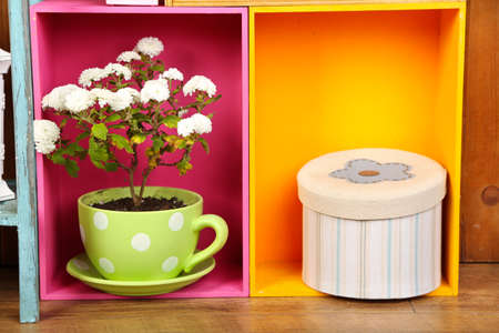 home related: Beautiful colorful shelves with different home related objects, close-up Stock Photo