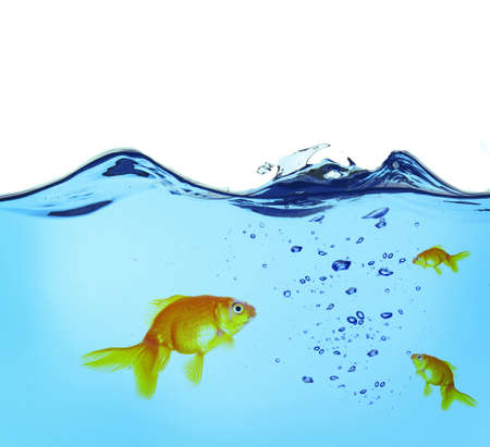 goldenfish: Goldfishes in water Stock Photo