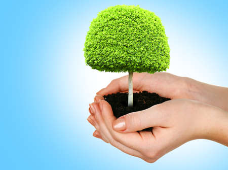 Small tree in hands on blue background