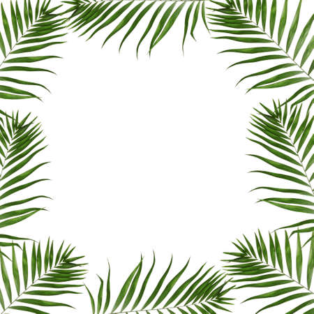 hamedoreya: Beautiful palm leaves shaped as frame with space for your text