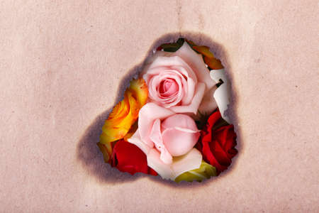 Beautiful roses through hole in craft paper photo