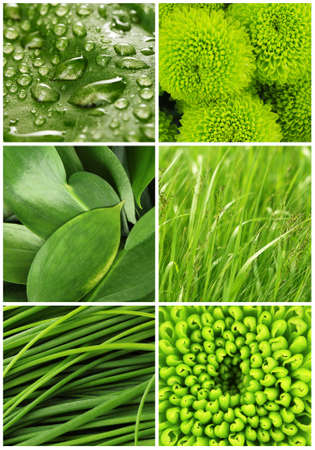 green flowers: Green color samples collage