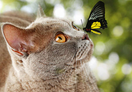 Colorful butterfly sitting on cats nose on green natural background