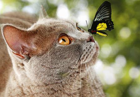 Kleurrijke vlinder zitten op de neus van de kat op groene natuurlijke achtergrond Stockfoto