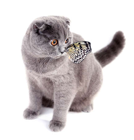 Cute cat and butterfly isolated on white photo
