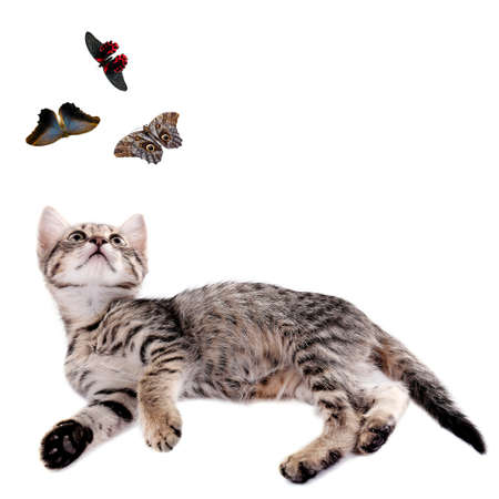 Cute kitten playing with butterflies isolated on white photo