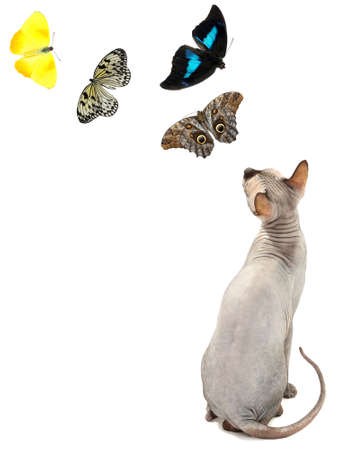Cute cat and butterflies isolated on white photo