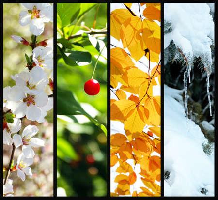コラージュの四季: 冬、春、夏、秋 写真素材