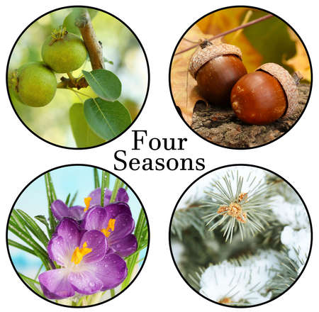 Four seasons collage: winter, spring, summer, autumn, and space for text photo