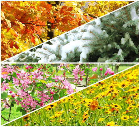 Four seasons collage: winter, spring, summer, autumn