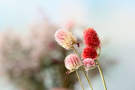 Beautiful dried flowers on bright background photo