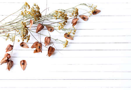 Dried flowers on color wooden planks background photo