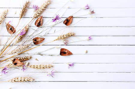 dried flowers: Dried flowers on color wooden planks background