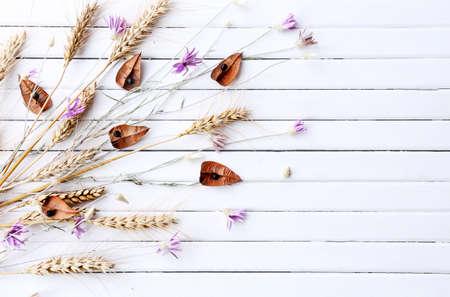flores secas: flores secas en el color de fondo tablones de madera