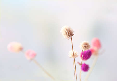 plant design: Beautiful dried flowers on bright background