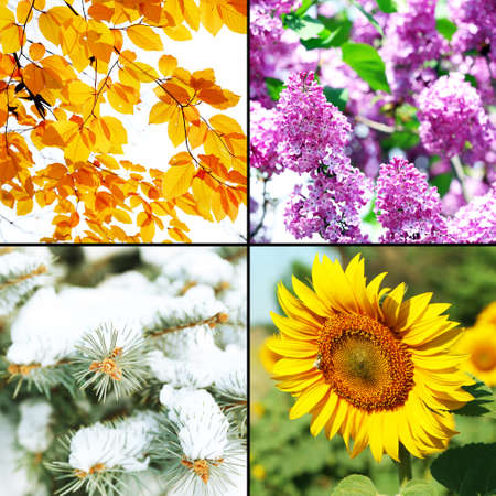 Quatre saisons collage: hiver, printemps, été, automne Banque d'images - 36694442