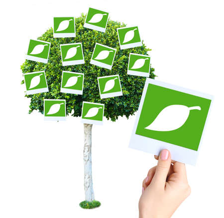 it is isolated: Big green tree with photo cards on it isolated on white Stock Photo