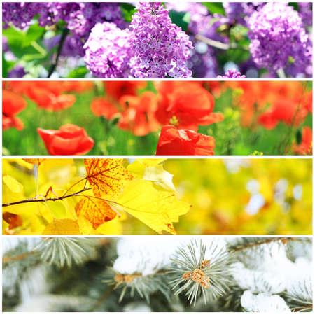 four seasons: Four seasons collage: winter, spring, summer, autumn