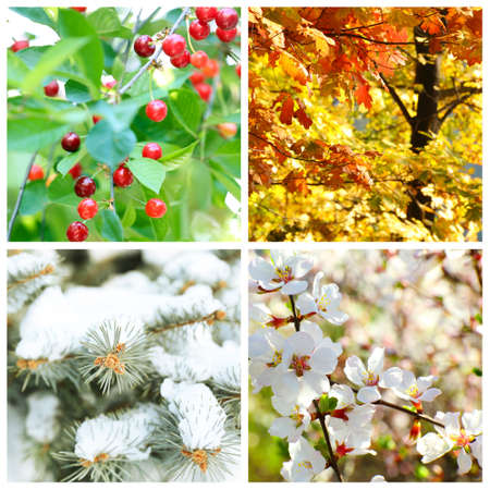 four: Four seasons collage: winter, spring, summer, autumn